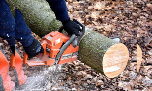 What To Consider Before Hiring A Tree Removal Company