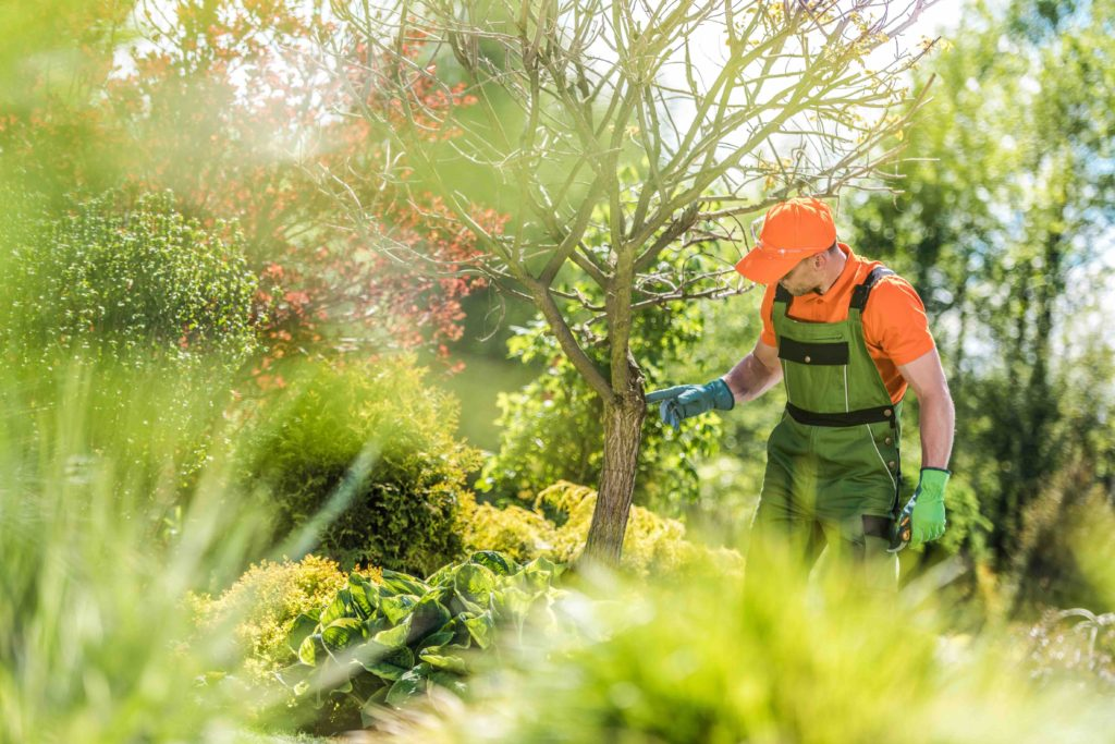 Everything You Need to Know About Summer Tree Care